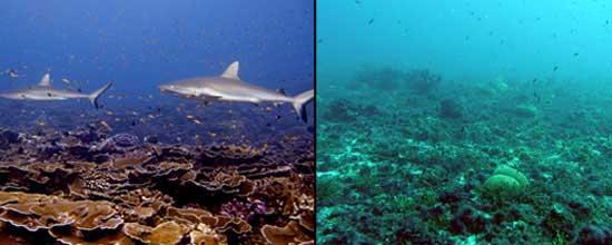 ecosistema-intacto-degradado.jpg