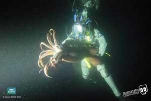 encuentro con el calamar gigante de Humboldt