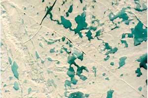 estanques entre el hielo del Océano Ártico