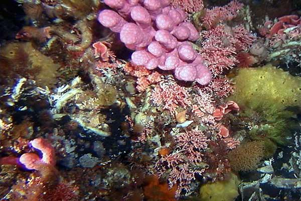 hábitat de hidrocorales y esponjas