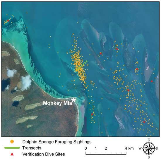mapa zonas donde delfines recojen esponjas marinas