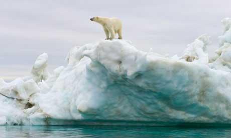 oso polar sobre el hielo en el Ártico