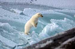 oso polar quiere subir al submarino