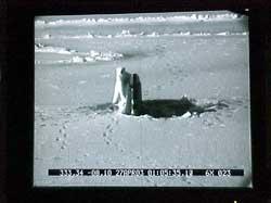 oso polar de pie en la torreta de un submarino