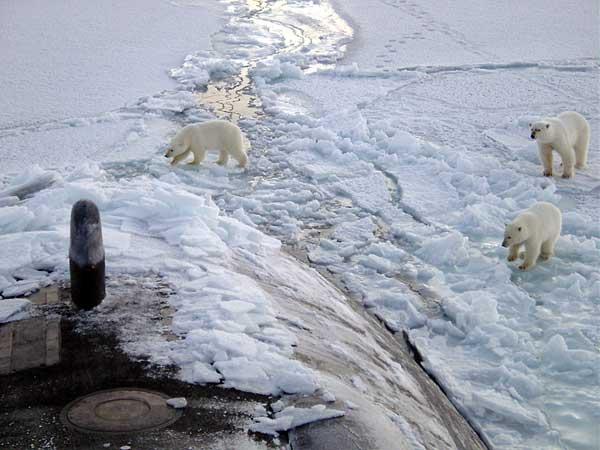 osos polares investigando un submarino