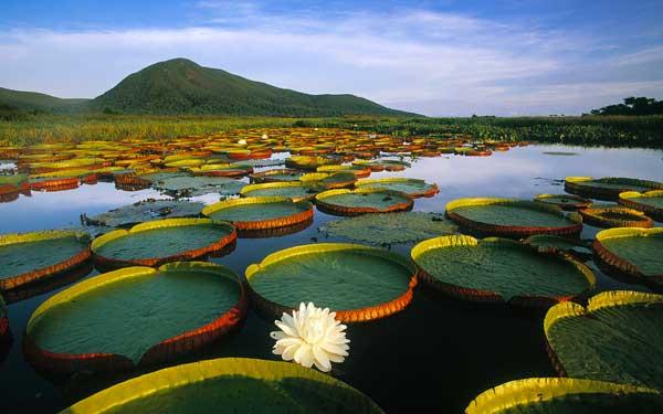 pantanal Matogrossense, Brasil