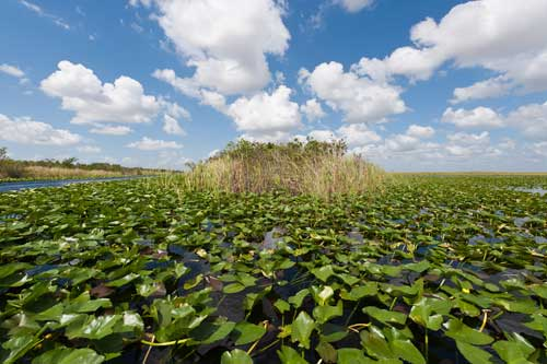 Los Everglades, Florida, EE.UU.