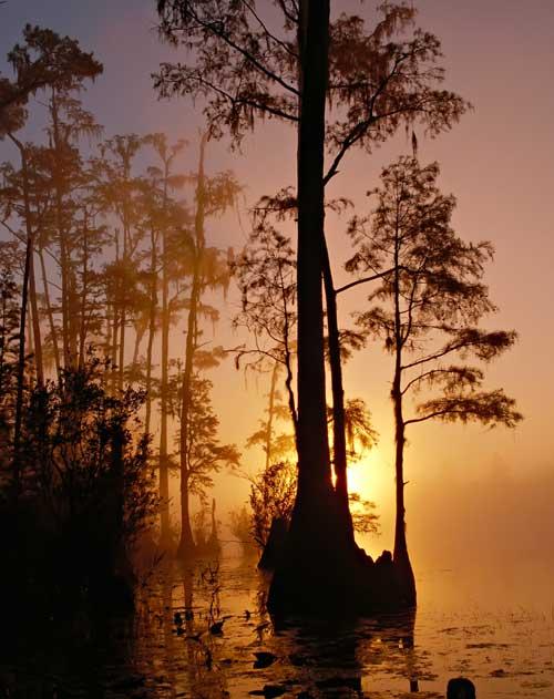 pantano Okefenokee Georgia y Florida, EE.UU.