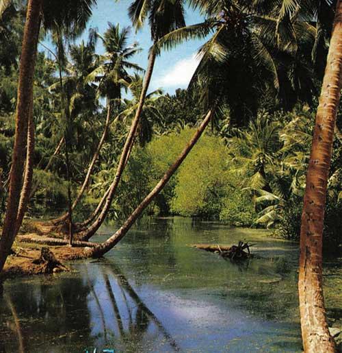 pantanos de La Digue, Seychelles