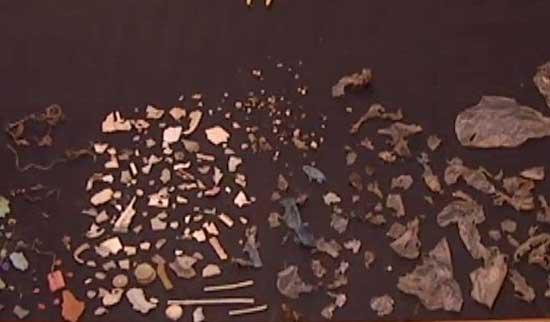 restos de plástico en el estómago de una tortuga marina gigante