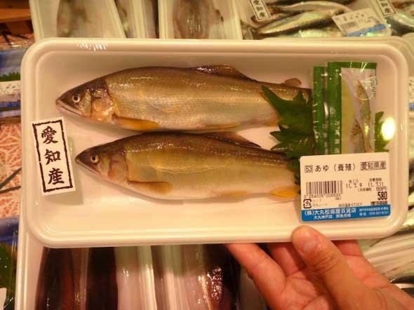 salmónidos japoneses