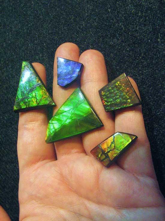 varias piedras de amonites