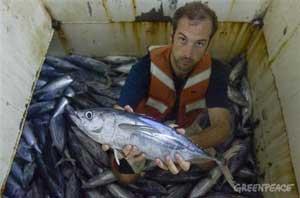atún juvenil de pesca incidental