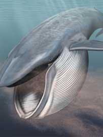 boca de la ballena azul