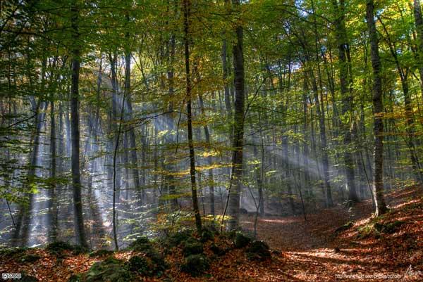 bosque en el Ampurdan, Girona