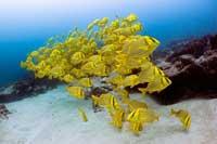vida marina en la reserva marina de Cabo Pulmo, México