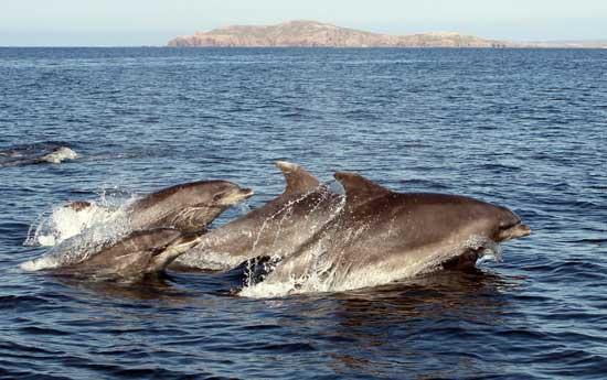 un grupo de delfines nariz de botella