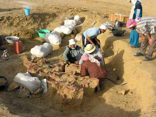 excavación en Egipto del fósil de Basilosaurus isis