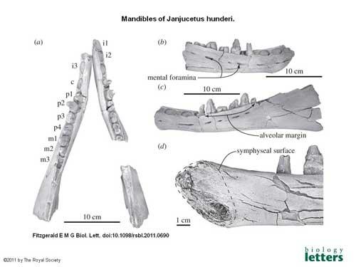 fósiles de Janjucetus hunderi