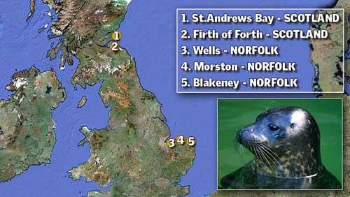 localización de ejemplares de foca muertos por el 'sacacorchos'