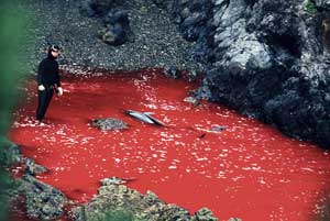 masacre de delfines en Taiji, Japón