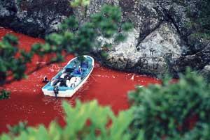 matanza de delfines en Taiji, Japón
