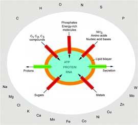 materiales necesarios para el origen de una célula viva