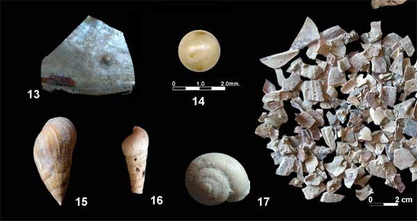 restos de moluscos encontrados en la cueva Bajondillo, Málaga