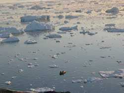pescadores en aguas de Groenlandia