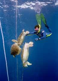tortugas enredadas en una red abandonada