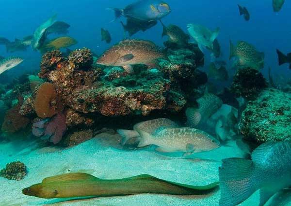 vida marina en Cabo Pulmo