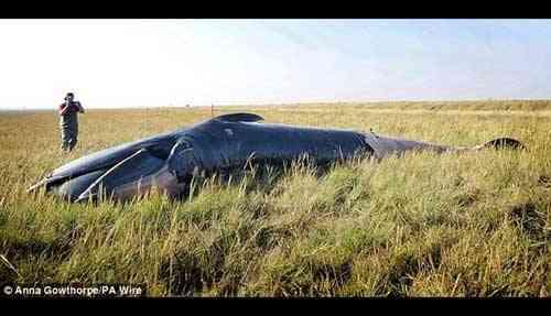 ballena varada en medio de un campo
