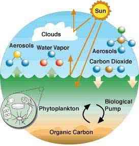 circulación del calor entre los océanos y la atmósfera, efectos en biología