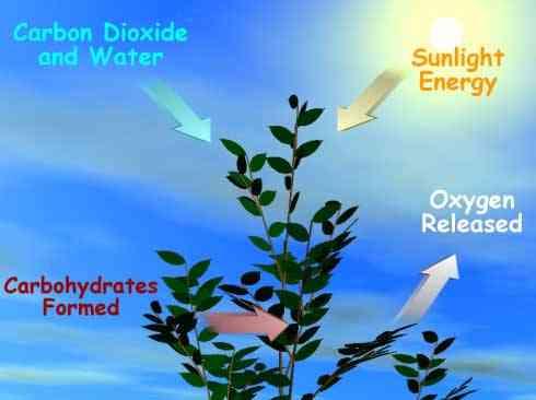 fotosíntesis, esquema