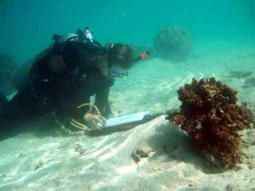 mediciones en un arrecife de coral