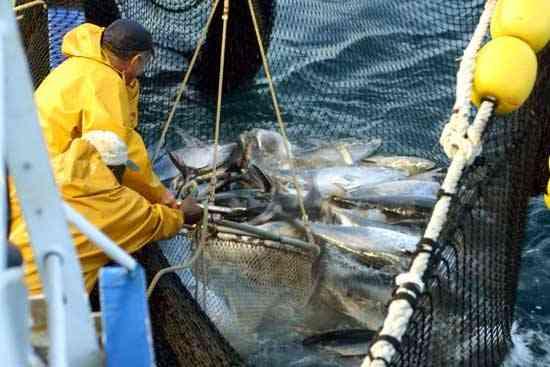 pesquería de atún