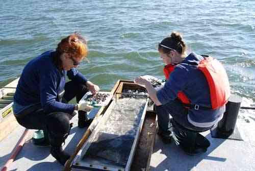 recuperando artefactos de barco de Barbanegra
