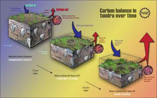 balance el carbono en el permafrost