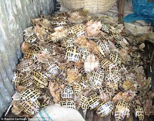 caparazones apilados de tortugas
