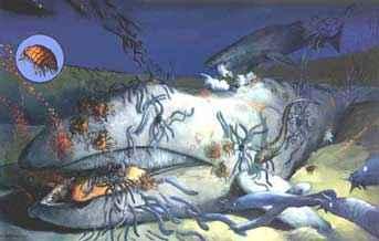 carroñeros se alimentan de una ballena