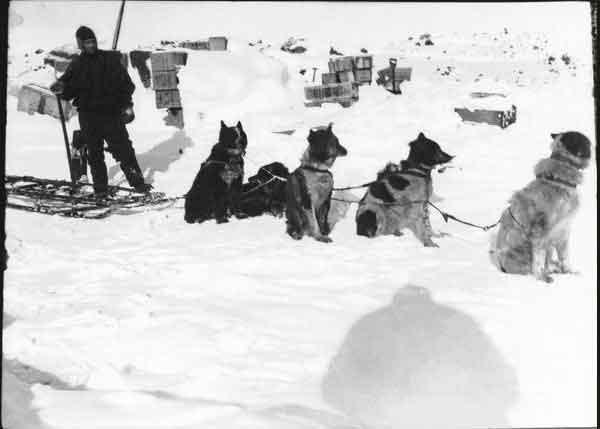 Demetri Gerof y perros, expedición Scott al Polo Sur