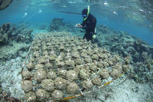 estudio de los efectos de las algas en un cultivo de coral