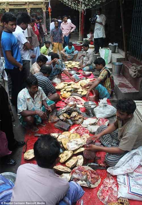 mercado de tortugas en Bangladesh