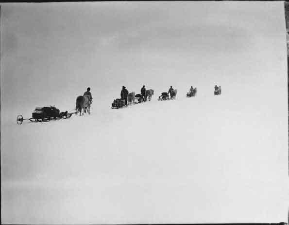 poneys caminando por el desierto helado