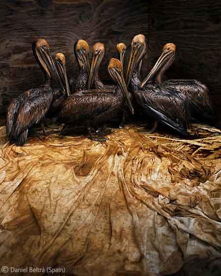 Still life in oil, de Daniel Beltrá