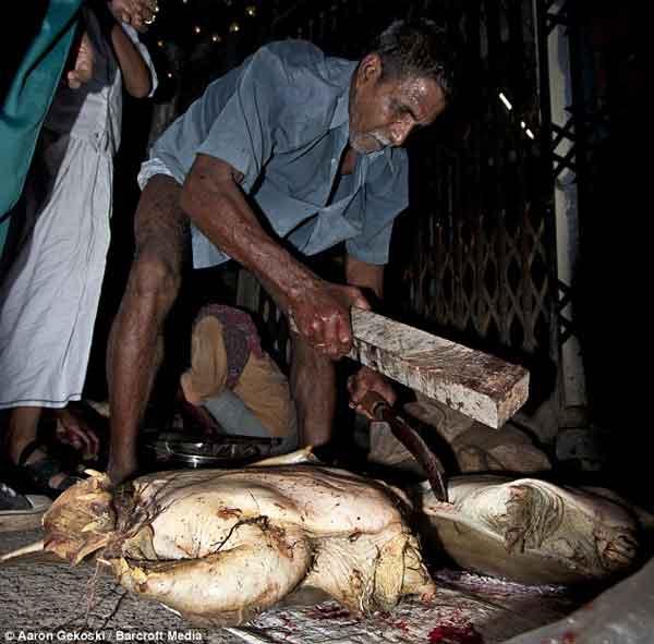 tortuga es sacrificada en Bangladesh