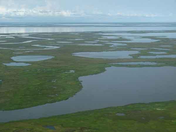 tundra Alaska