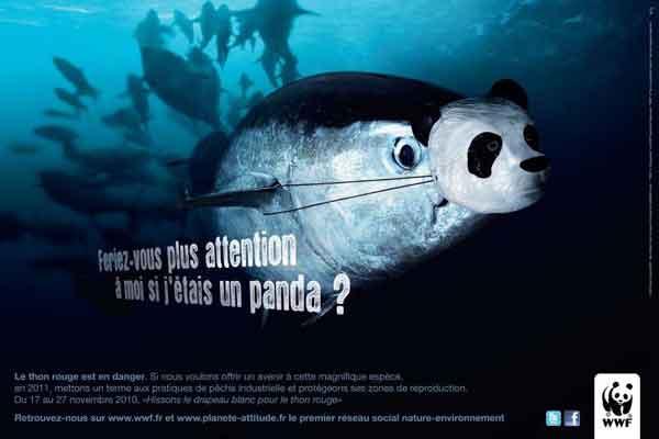 wwf campaña a favor del atún rojo, panda con careta