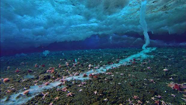 brinicle, salmuera congelada en la Antártida