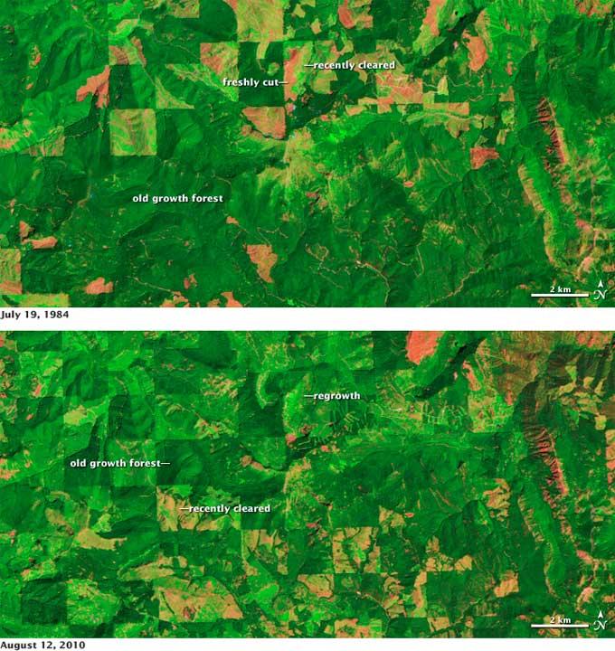 cambios en los bosques vistos desde satélite 1984-2010
